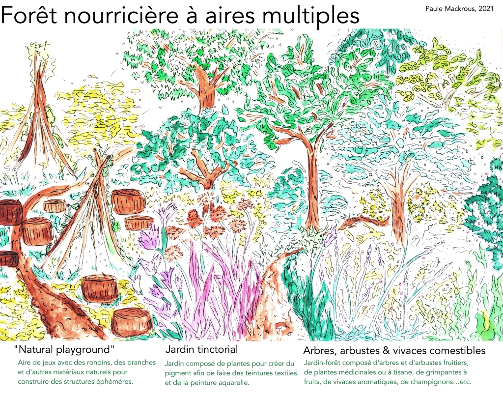 Forêt nourricière à aires multiples (croquis) - Paule Mackrous, 2021