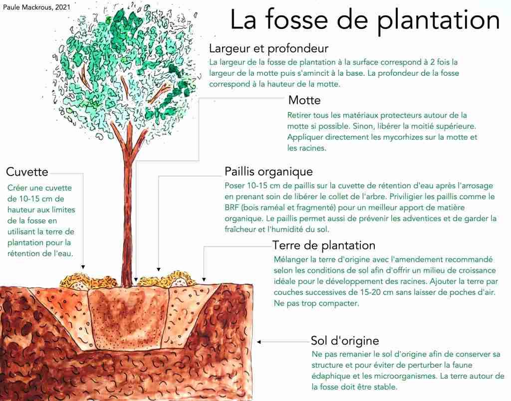 Fosse de plantation d'arbres - Paule Mackrous, 2021